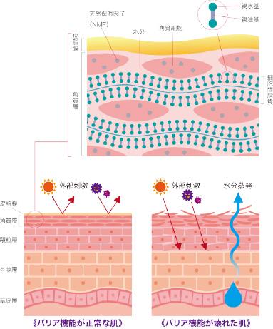 皮膚のバリア機能
